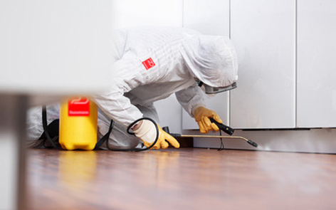 Services Offered By Pest Control Companies